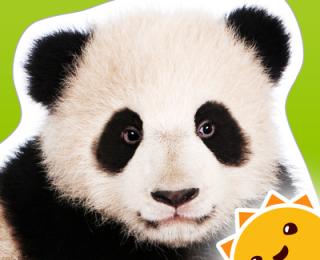 Zoo Animals ~ Touch, Look Listen